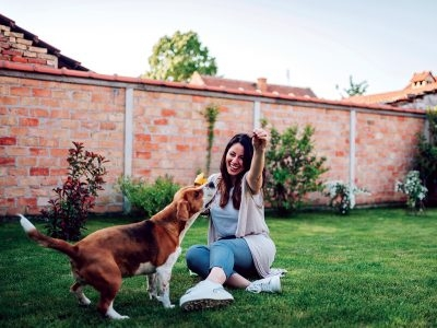 8 Tips for Having A Great Yard for Your Pet in the Spring